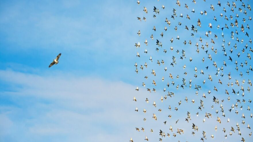Individuality concept, birds in flight