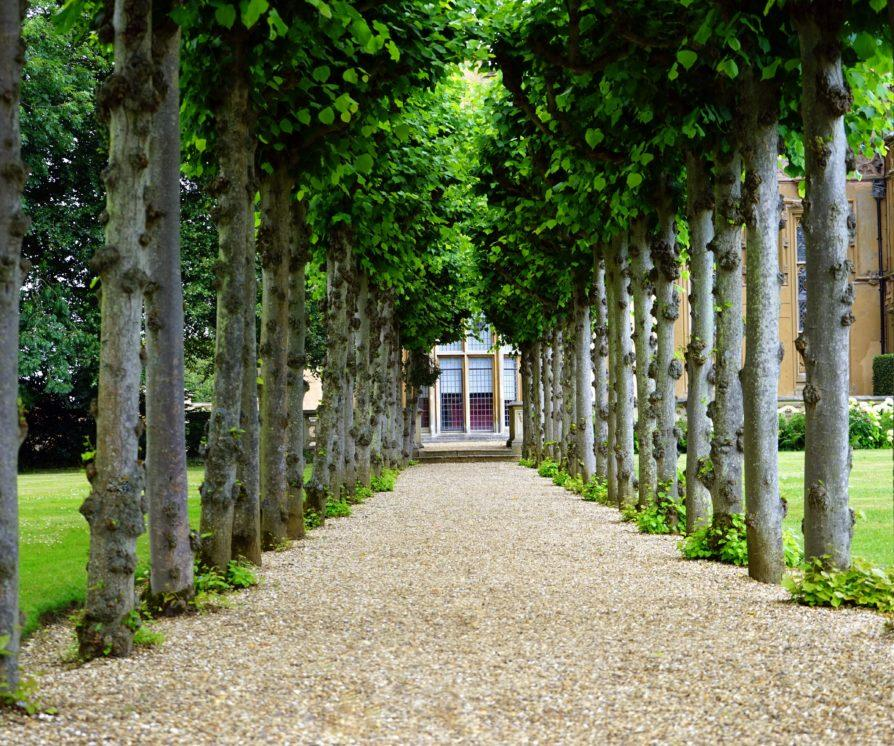 Front walkway lined with trees, leading up to a large private home